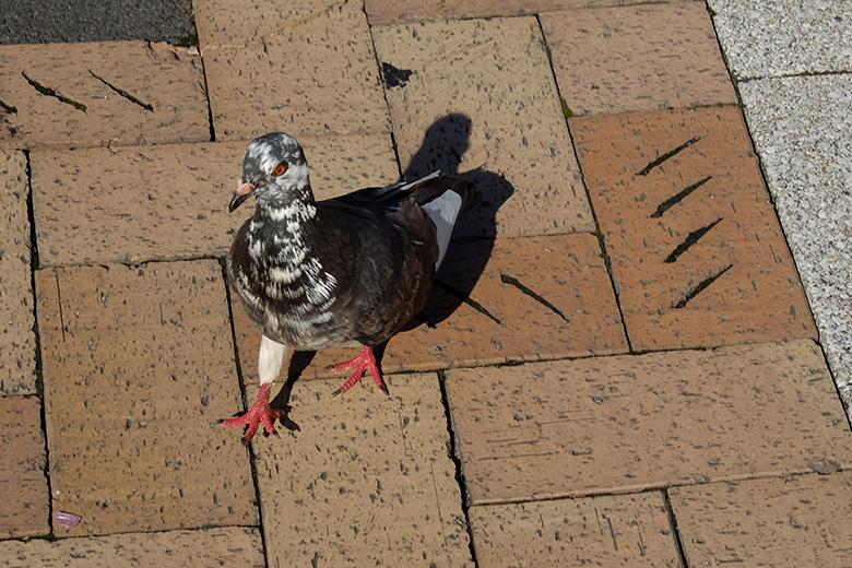 熱海駅前の鳩
